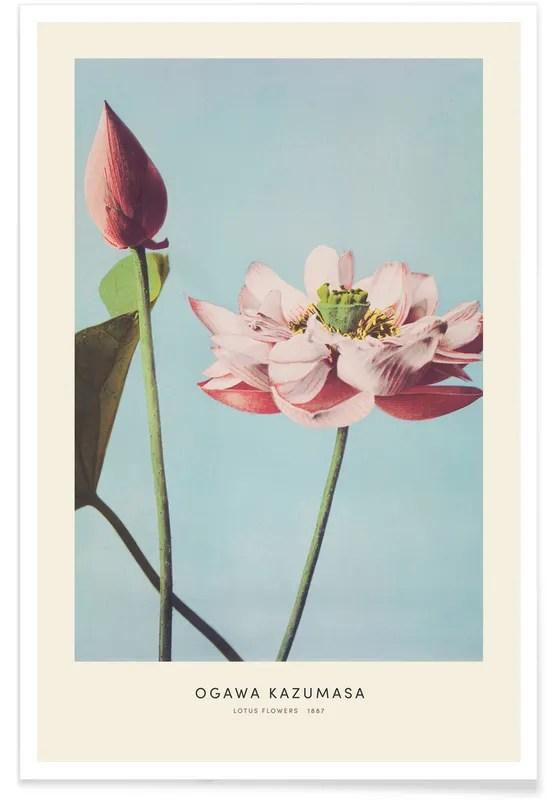 kazumasa lotus flowers poster