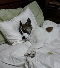 Should You Go to Sleep an Hour Earlier?