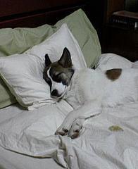 Go to sleep an hour early!