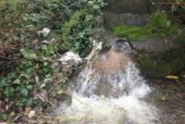 Vertidos residuales en el lago de Sanabria - Foto: elPais.com