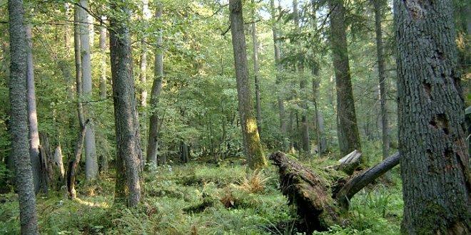 Fuerte impacto medioambiental con la deforestación de los bosques