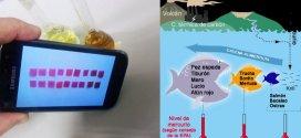 Detección de la contaminación de mercurio por móvil