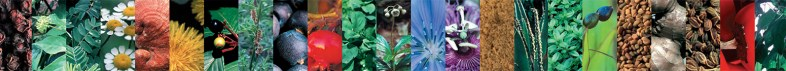 intra-lifestyle-23-plante-botanice