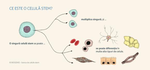 natural-stem-freeways-celule-stem