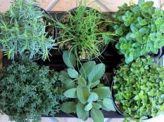 872-le-erbe-aromatiche-officinali-nella-tradizione-italiana