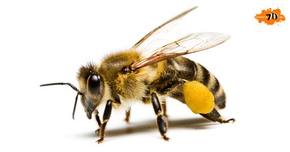 Представьте себе, что вас попросили создать пчелу