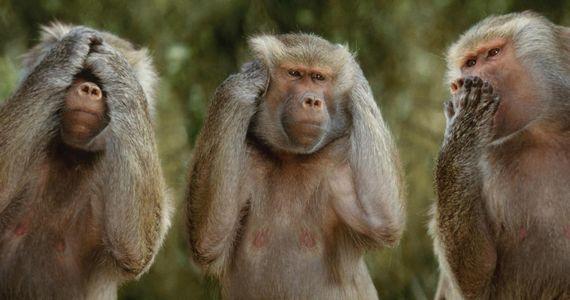 отличия человека от обезьяны