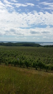 Vineyards at Chateau Grand Traverse