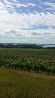 Vineyards at Chateau Grand Traverse