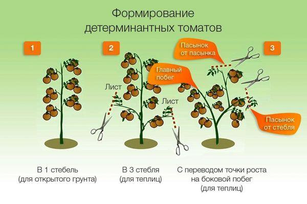 Схема выращивания детерминатного сорта