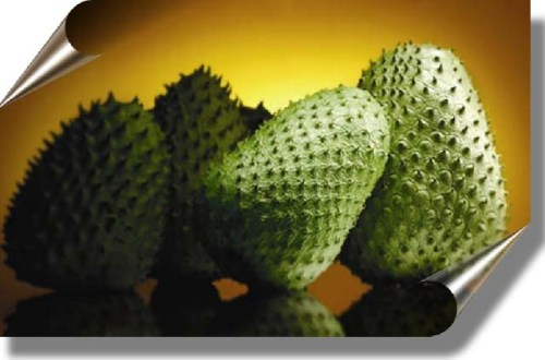 La Graviola o Guanabana Planta Milagrosa