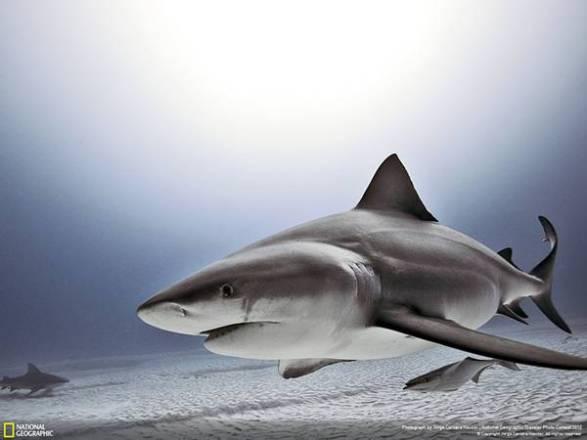 サメを見習おう!