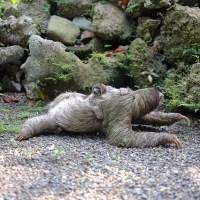 Evolutionary Theory: Why Sloths Are So Goddamn Lazy