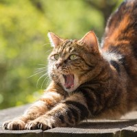 Pandiculation: The Name For When You Yawn and Stretch