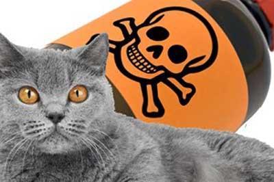 poisoned-cat