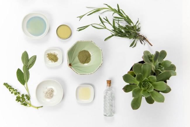 tumbuhan-organik-semulajadi