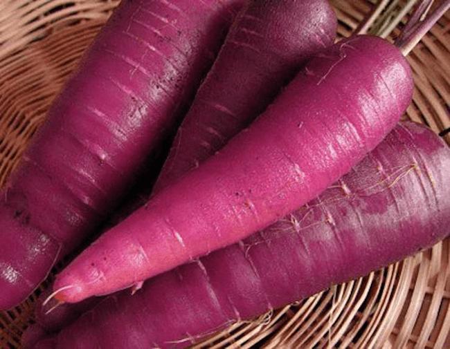 lobak purple bantu rawat sakit sendi