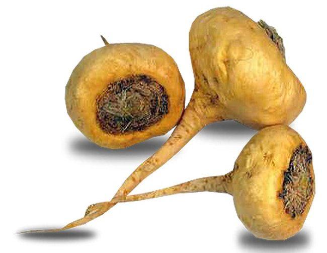 akar maca untuk kesihatan rahim