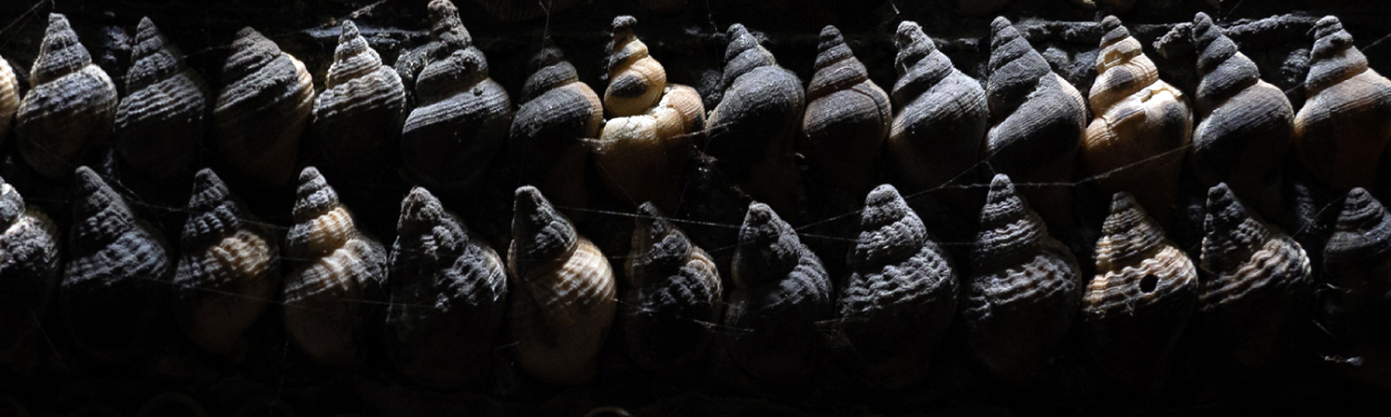 Shells in Shell Grotto, Margate, UK