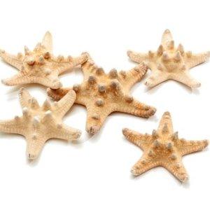 Estrela do mar com bicos branca 10uni