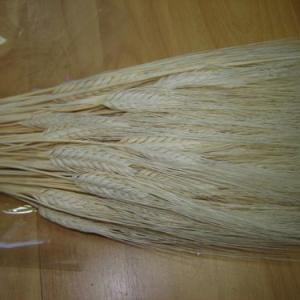 Espigas brancas com barbas (triticum)