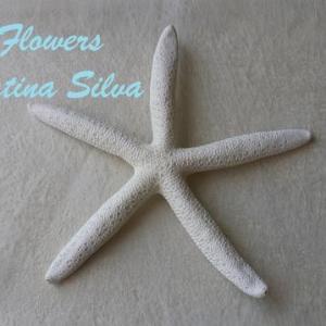 Estrela do mar branca Grande 16-18cm