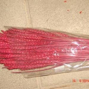 Espigas de trigo cor-de-rosa