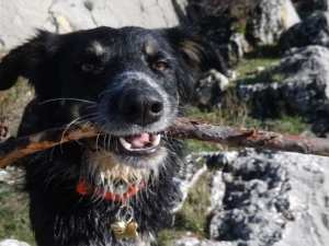 Aktiver Hund in Frankreich