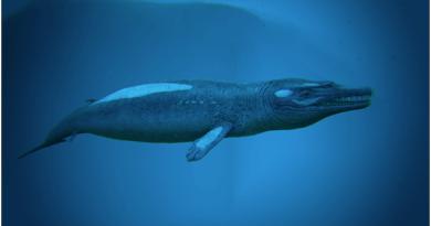 Ark Basilosaurus
