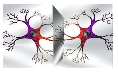 Tus neuronas y las mías