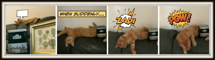 cat progress collage b zap.jpg