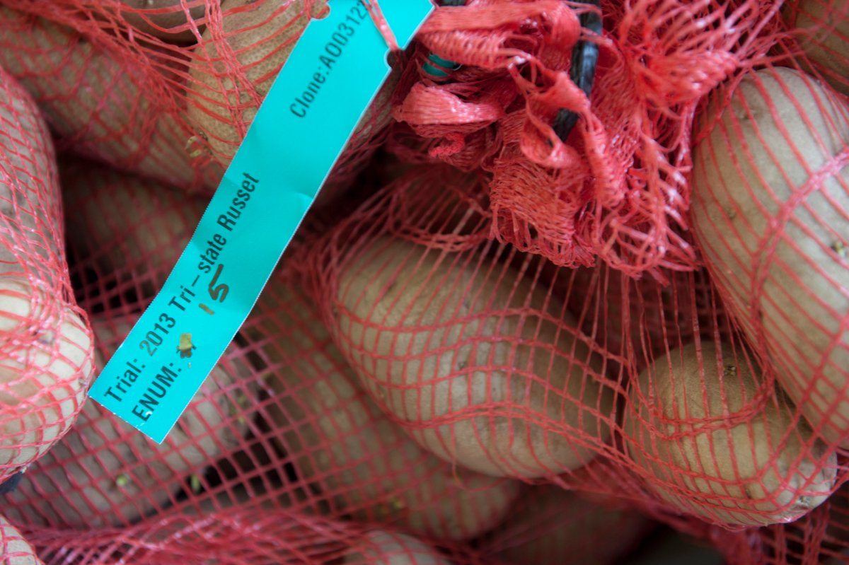 Potatoes in mesh bag with trial tag