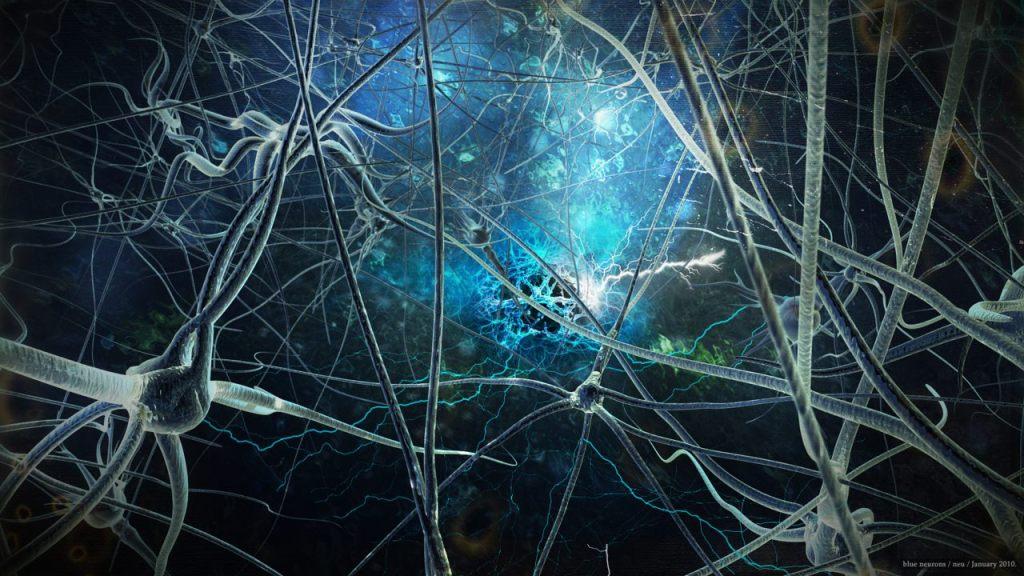 Is neurowetenschap relevant voor coaches?