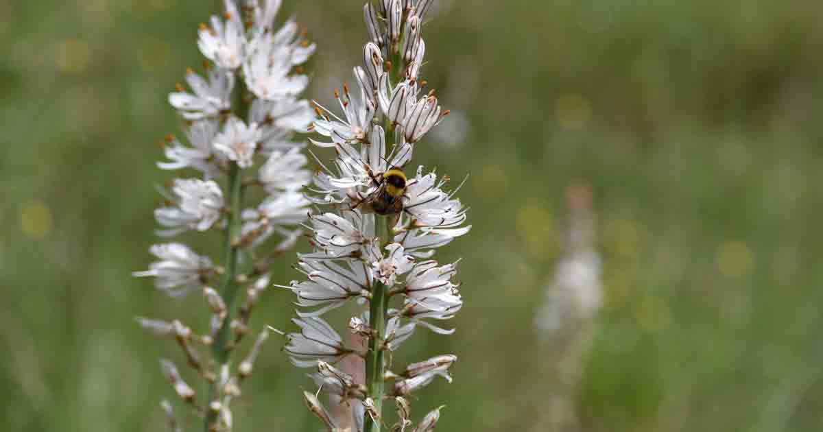 What Are the Benefits and Uses of Spikenard?