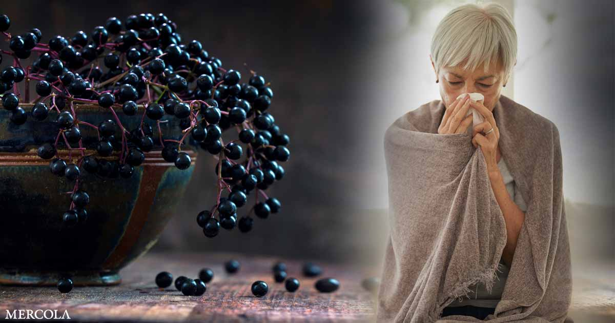 Elderberry Offers Powerful Protection Against Influenza