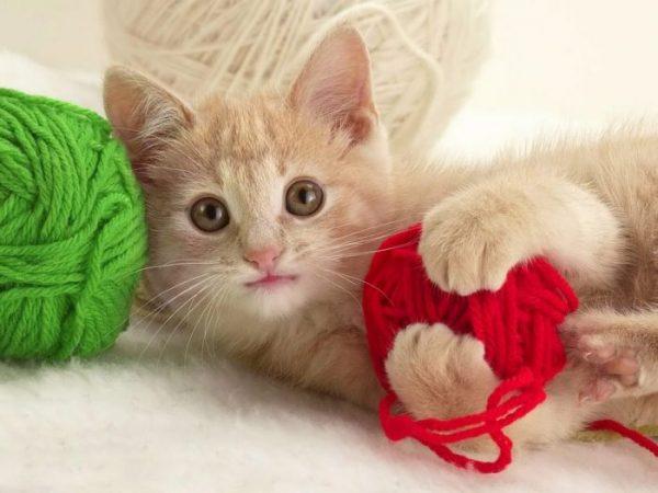 Котёнок и клубки