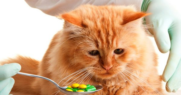 Vitamin untuk kucing.