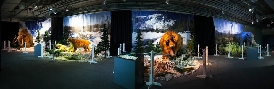 Kokoro - Ice Age Exhibit