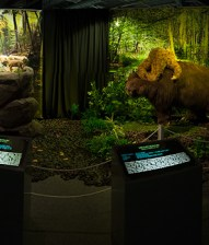 Kokoro - Ice Age Exhibit 2