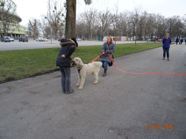 Project Canis - Problemhundetraining 5