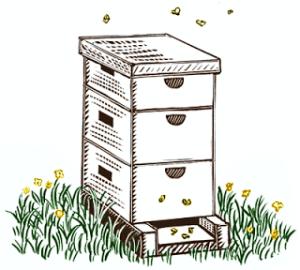 langstroth-hive