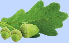 oak laf