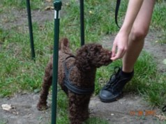 Project Canis - Problemhundetraining 3