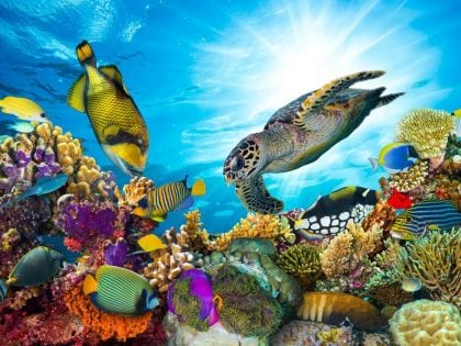 Colorful coral reef with many fish and sea turtles