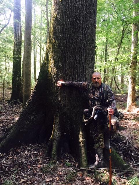 5-6' DBH Nuttall oak