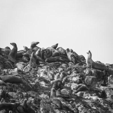 sea lions on seal rock along 17 mile drive in Pebble Beach, California Not So SAHM