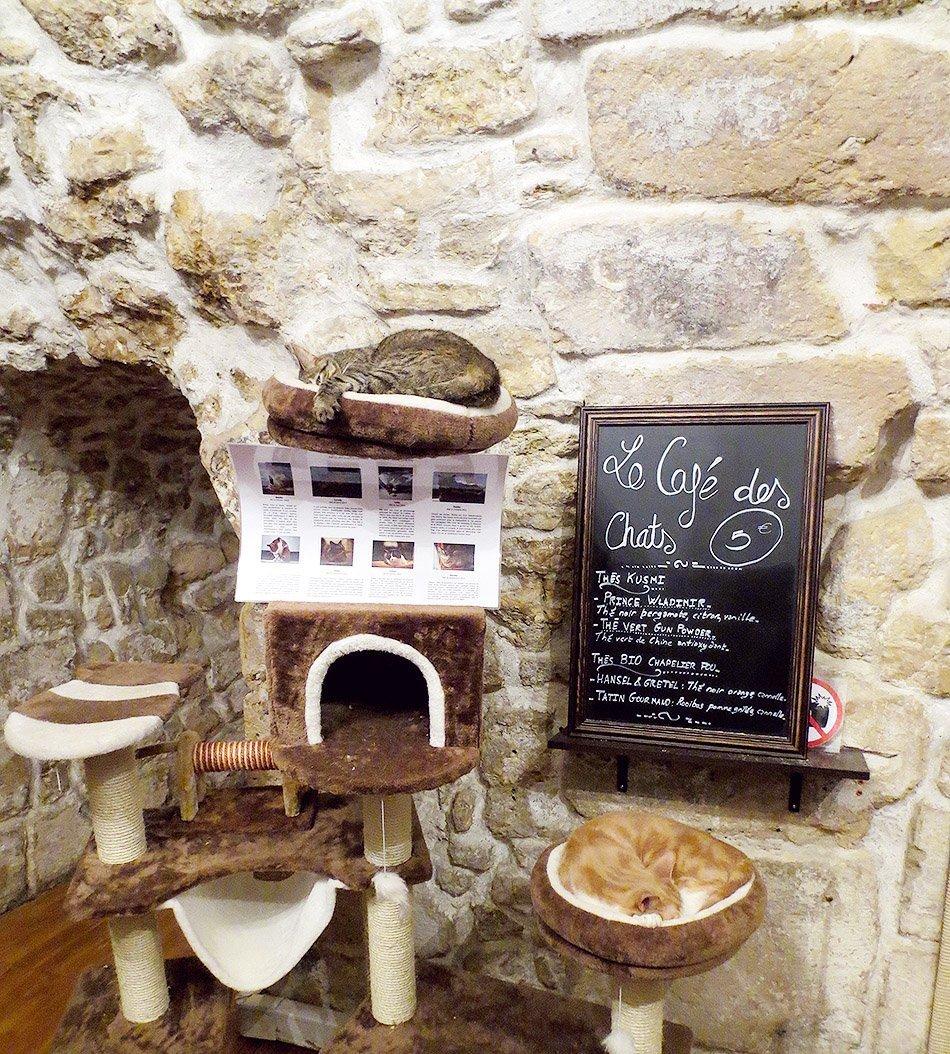 Cafe Des Chats Bastille Paris