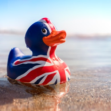 The Brexit Union Jack Duck