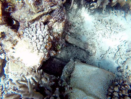 airplane part in coral found during bentprop search