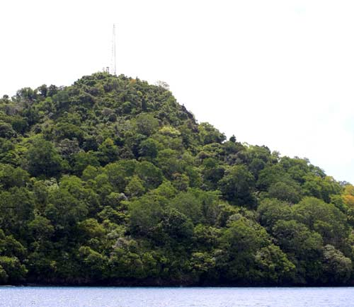 palau island jungle being explored by CAT and bentprop